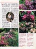 vedi PDF - Rose Del Bufalo - Page 3