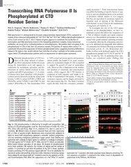 Transcribing RNA Polymerase II Is Phosphorylated at CTD Residue ...