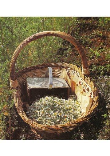 Gardenia (giugno): Il maso delle erbe - Pflegerhof