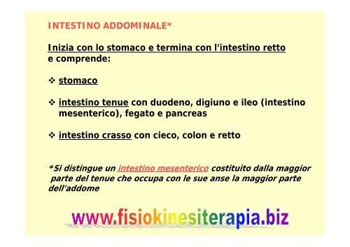 L'intestino tenue - Fisiokinesiterapia.biz