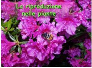 la riproduzione nelle piante terrestri - Biologia Vegetale