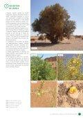 L'ARGANERAIE ALGERIENNE - PNUD - Page 5