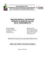 insulina regula los niveles intracelulares de calcio en el cardiomiocito