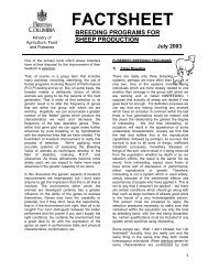 Breeding Programs For Sheep Production - Agriculture