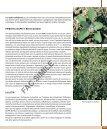 Terza parte: Divisione Fanerogame - classe Dicotiledoni - Page 2