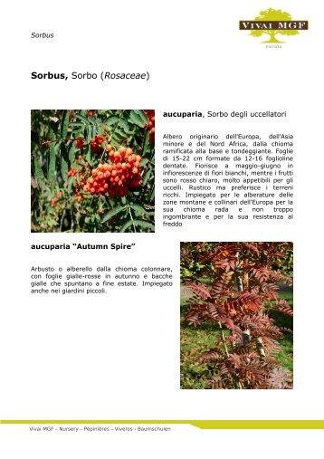 Sorbus - Sorbo - Vivai MGF