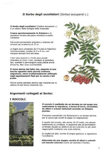 Il Sorbo degli uccellatori (Sorbus aucuparia L.)