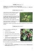 Il Sorbo degli uccellatori (Sorbus aucuparia L.) - Page 3
