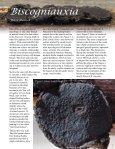 1 - Foray Newfoundland and Labrador - Page 5