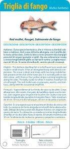Guida dei pesci della Sardegna - Page 5