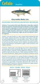 Guida dei pesci della Sardegna - Page 7