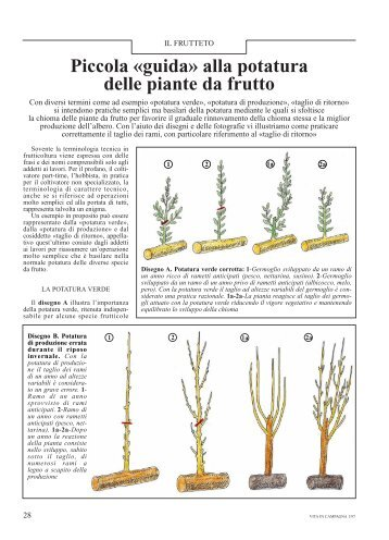 Potatura piante da frutto potatura piante da frutto for Vivai piante da frutto