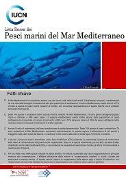 Lista Rossa dei Pesci marini del Mar Mediterraneo - IUCN