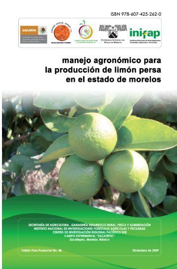 Producción de Limón Persa en Morelos - por que lo importante no ...