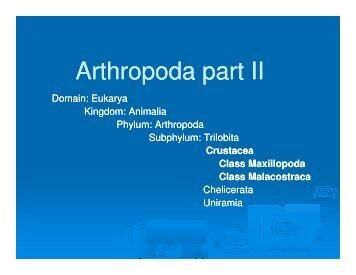 Notes: Arthropoda Part II