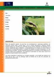 Hyla meridionalis (Boettger, 1874) Ranita meridional ... - Bionatura