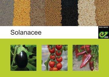 Solanacee - Enza Zaden