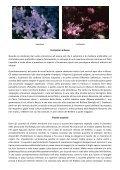 B e s s a - Page 7