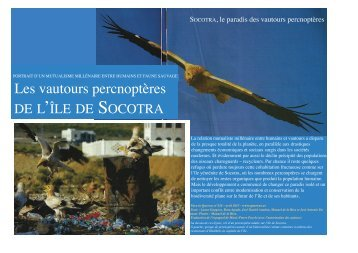 Quercus n° 326 Percno à Socotra traduit