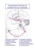 Système Nerveux Autonome - Page 3