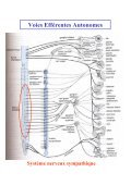 Système Nerveux Autonome - Page 6