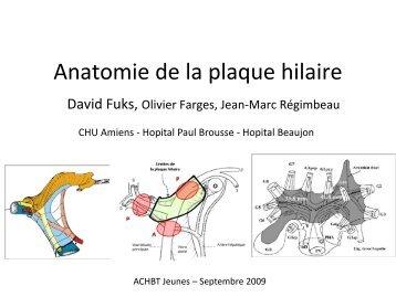 Anatomie de la plaque hilaire