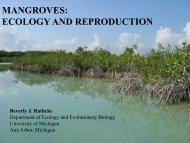 Mangroves - Bacalar