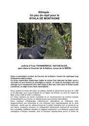 Ethiopie : Un peu de répit pour le NYALA DE MONTAGNE - Natur'ailes