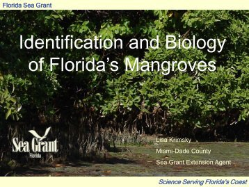 Identification and Biology of Florida's Mangroves - Miami-Dade ...