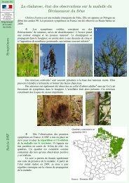 S'informer >> sur la Chalarose du frêne