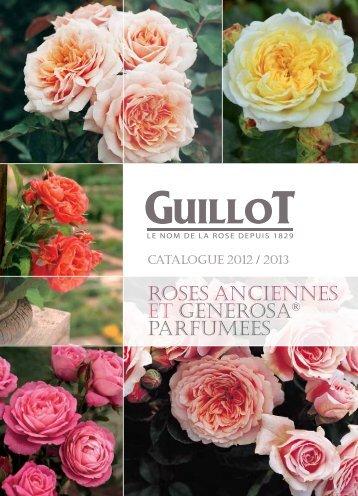 ROSES ANCIENNES et GENEROSA® PARFUMEES - Roses Guillot
