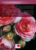ROSES ANCIENNES et GENEROSA® PARFUMEES - Roses Guillot - Page 4