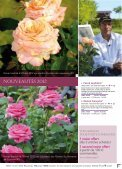 ROSES ANCIENNES et GENEROSA® PARFUMEES - Roses Guillot - Page 5