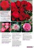 ROSES ANCIENNES et GENEROSA® PARFUMEES - Roses Guillot - Page 7