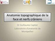 Anatomie topographique de la face et nerfs crâniens - Le Campus ...
