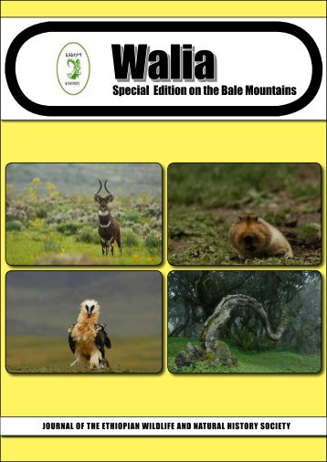 Walia Special Edition on the Bale Mountains (2011) - Zoologische ...