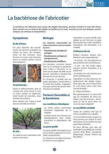 Canevas cerisier chambre d 39 agriculture de lot et garonne - Chambre agriculture languedoc roussillon ...