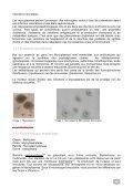Comparaison de trois méthodes pour la détection de Mycoplasma et ... - Page 6