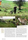 De magnifiques rous s - Derry Quay Lodge - Page 3