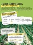 Le lecteur de chlorophylle, pour la juste dose d'azote dans ... - CDAQ - Page 5
