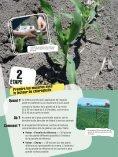 Le lecteur de chlorophylle, pour la juste dose d'azote dans ... - CDAQ - Page 7