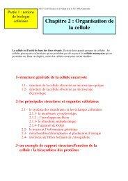 Chapitre 2 : Organisation de la cellule