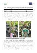 Les cultivars des plantes invasives présentent-ils également un ... - Page 2