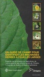 un guide de champ pour identifier les mauvaises herbes à feuilles
