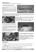 Quelle limace - Cercles des Naturalistes de Belgique - Page 5