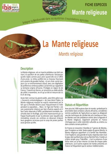 La mante religieuse for Chambre d agriculture 34