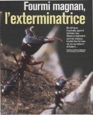 Fourmi magnan, l'exterminatrice - Site fourmis perso Alain Lenoir