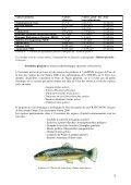 Etude « Coins de pêche » : Le Neez - Page 4