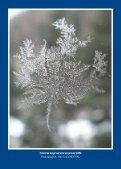 Cristal de neige sur vitre en janvier 2009 - Club alpin français - Page 2