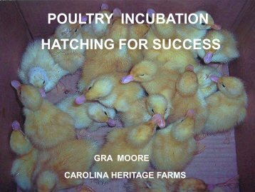 POULTRY INCUBATION HATCHING FOR SUCCESS